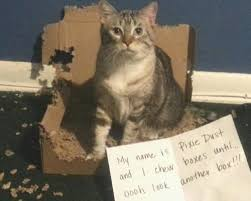 15 Best Cat Memes Ever - 15 best cat memes ever due to Meme Bibliothek via Relatably.com