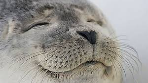 This is the most satisfied seal I've ever seen - Imgur via Relatably.com
