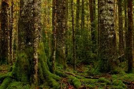 Sierra Álamos – Río Cuchujaqui (Area protegida) Images?q=tbn:ANd9GcRucXuImae6HyBltjUfeYrO8HUcgt-h5ZTeaqjOHgTREzg5HKLV