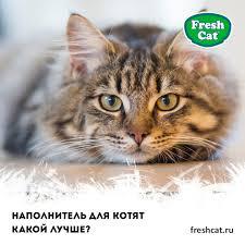 Лучший <b>наполнитель для кошачьего туалета</b> от запаха - Fresh Cat