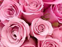 ไอเดีย <b>Pink flower</b> 900+ รายการ ในปี 2021   ดอกไม้, กุหลาบ, ธรรมชาติ