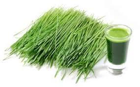 """Résultat de recherche d'images pour """"herbe de blé en poudre"""""""