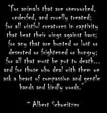 Search albert schweitzer quotes images via Relatably.com