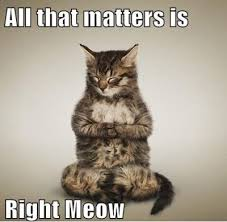 FunniestMemes.com - Funny Memes - [All That Matters Is Right Meow] via Relatably.com