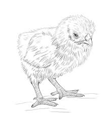 Small Picture Baby Chick coloring page Free Printable Coloring Pages