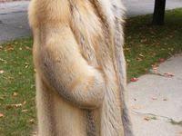 500+ Golden Island Fox Furs ideas in 2021 | fox fur, fur <b>coat</b>, <b>fox</b> fur ...
