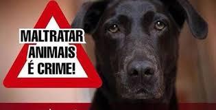 Resultado de imagem para Saiba como denunciar maus-tratos a animais