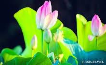 <b>Lotus</b> Fields | RUSSIA.TRAVEL