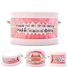 Easyinsmile Dental Orthodontic Model Teeth Model ... - Amazon.com