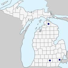 Reseda lutea - Michigan Flora
