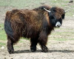 James Gilliland ~ The Great Yak Escape Part 2, UFOs and the New Energies Images?q=tbn:ANd9GcRvkNY9VEYYsoBzUKXsyqR3U6ypnwCQo0v-YX1ZkRzuR6AOV3TT