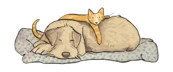 """Résultat de recherche d'images pour """"gif de chiens et chats"""""""