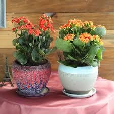 Premium <b>Plants</b> | <b>Luxury Plants</b> and Flowers in India | FlowerAura