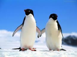 Resultado de imagem para pinguim