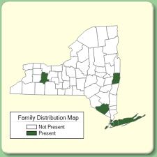 Buxaceae - Family Page - NYFA: New York Flora Atlas - NYFA: New ...