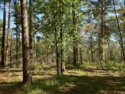 <b>Atlanta State Park</b> - 2019 All You Need to Know BEFORE You Go ...
