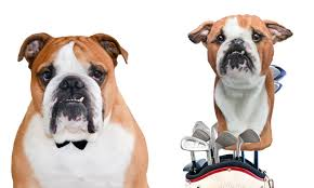 Custom <b>Golf Headcovers</b> of Pets - Dogs & Cats | Cuddle Clones