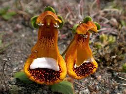صور نباتات عجيبة