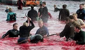 「壱岐イルカ事件」の画像検索結果