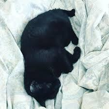 <b>Без кота</b> и жизнь не та Мое утро начинается со здоровенной ...
