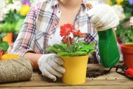 <b>Удобрения</b> для домашних и садовых <b>цветов</b>: натуральные ...