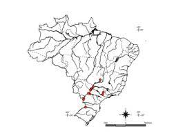 Resultado de imagem para IMAGENS DE PIRACANJUBA PEIXE