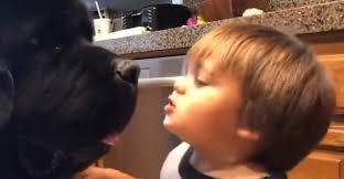 Toddler Gives a Giant Dog a Kiss, Only to Be Knocked Over by a ...