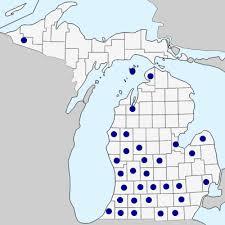 Lamium purpureum - Michigan Flora