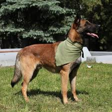 <b>Косынка охлаждающая для собак</b> Osso Fashion XL - Интернет ...