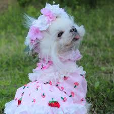 OnnPnnQ Fashion <b>Pet Dog</b> Handmade <b>Sunflower</b> Garland Small ...