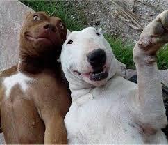 """Résultat de recherche d'images pour """"photobomb animal"""""""