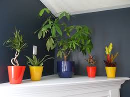 house plants not poisonous to cats be natural home decoration amazing indoor ideas design with colorful amazing office plants