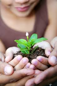 Image result for hands holding a plant