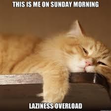 The Lazy Cat | Meme Generator via Relatably.com