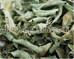 melisa çayı bitkisi ile ilgili görsel sonucu