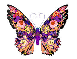 Image result for google images of butterflies