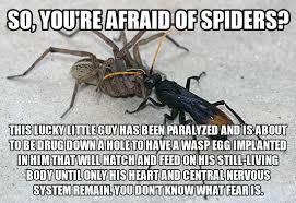 Scared Of Spider Funny Quotes. QuotesGram via Relatably.com