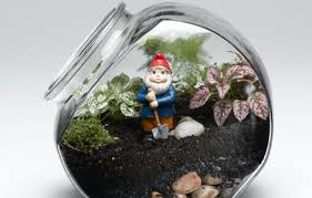Image result for terrarium gardens