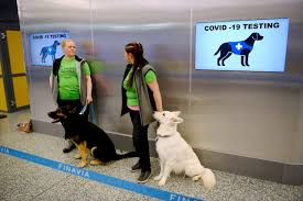 COVID-19: <b>Dogs are</b> detecting the virus at airports | <b>World</b> Economic ...
