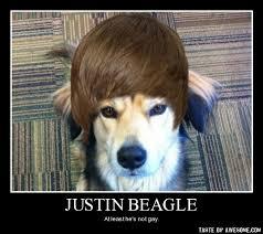 Funny Beagle Meme - ImageFiltr via Relatably.com