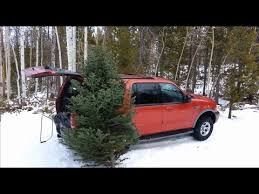 Cutting down a Real Christmas Tree - YouTube