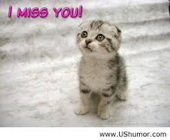 Memes Vault I Miss You Animal Memes via Relatably.com