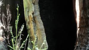 Image result for bark shadow