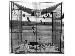 Natural Insect Control  NIC specializes in Canadian Beneficial    Troyer V Top Starling   Sparrow Trap Plans Only