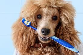 How to Brush Your <b>Dog's Teeth</b>