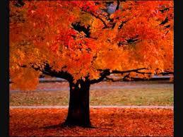 <b>Four Seasons</b> ~ Vivaldi - YouTube