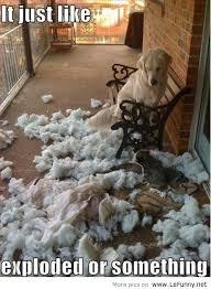 Funny-dog-is-not-guilty.jpg via Relatably.com