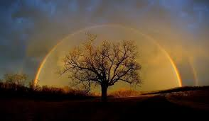 Image result for rainbow family