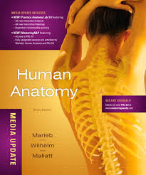 marieb anatomy and physiology essay questions and activities marieb anatomy and physiology essay questions and activities