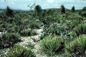 Sierra Álamos – Río Cuchujaqui (Area protegida) Images?q=tbn:ANd9GcRzvMHGDDvudJ6eDdGsXDxtakFWkK2nVQ2JpDLQxEs61GKXzc9a